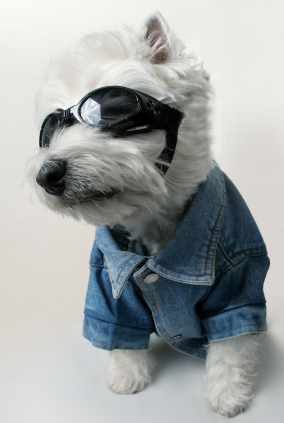 daytrading cool dog